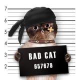zły kot Obrazy Stock