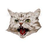 Zły kot ilustracja wektor