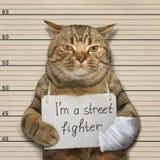 Zły kot jest ulicznym wojownikiem zdjęcia royalty free