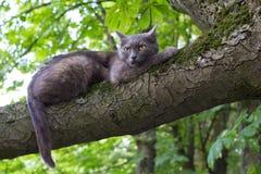 Zły kot przy drzewem Zdjęcie Royalty Free