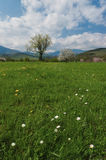 Z zieloną trawą wiosna drzewo Zdjęcia Royalty Free