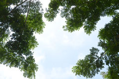 Z zielonymi liść sezonu drzewo Ilustracja Wektor