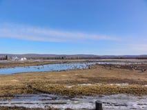 Załzawiony pole Zakrywający w gąskach i kaczkach obraz royalty free