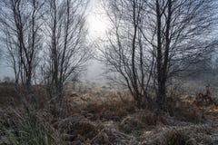 Załzawiony zimy słońce obrazy stock
