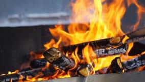 Zaświecał ognisko drewno zdjęcie wideo