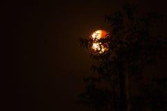 Zaświeca Krwionośną księżyc behind w cieniu drzewa i Cieni Zdjęcie Stock