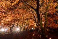 Zaświeca up Fuji Kawaguchiko jesieni liści festiwal 2015 Zdjęcie Royalty Free
