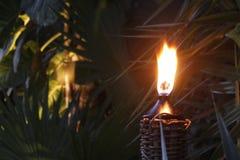 Zaświecająca pochodnia w dżungli przy zmierzchem fotografia stock