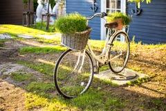 za bicyklu ogrodzenia starym parkowym drzewem fotografia stock