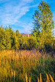 Za drzewami jest nowy kondygnacja dom w budowie Zdjęcia Stock