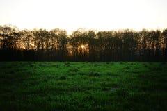 za drzewami sunset Zdjęcie Royalty Free
