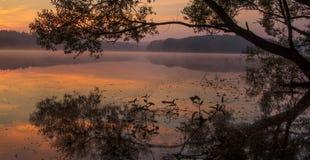 Za drzewnym wschodem słońca Obraz Stock