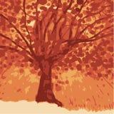 za drzewo słońca Zdjęcia Stock