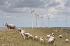 za duży pastwiskowymi caklami one wiatraczki obraz stock