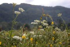 za dzikimi kwiat skałami Obrazy Royalty Free
