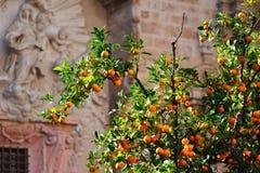 za kościelnego miasta pomarańczowym drzewem Fotografia Stock