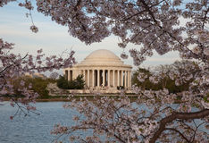 za okwitnięcia czereśniowym Jefferson pomnikiem Zdjęcia Stock