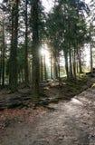 za słońc drzewami Zdjęcia Stock