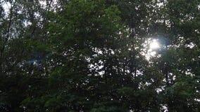 za słońc drzewami zdjęcie wideo