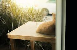 Za sceną kota obsiadanie przed domem Obrazy Royalty Free