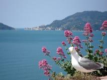 Za seagull widok sławna zatoka poety fotografia royalty free
