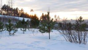 za setów słońca drzewami Kamera ruchy 4K zdjęcie wideo