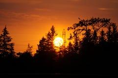 za sosnowymi stałego sunset drzewa dwa lata Obraz Royalty Free