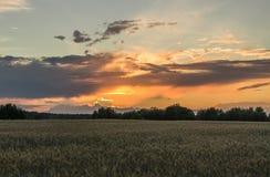 za sosnowymi stałego sunset drzewa dwa lata Zdjęcia Royalty Free