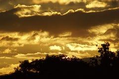 za sosnowymi stałego sunset drzewa dwa lata Fotografia Royalty Free