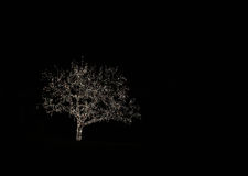 zaświeca drzewa Fotografia Royalty Free