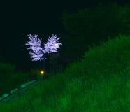 zaświeca drzewa Zdjęcie Stock