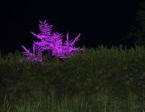 zaświeca drzewa Obrazy Royalty Free