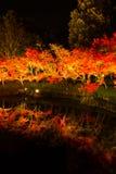 Zaświeca Up jesieni drzewa Obraz Royalty Free
