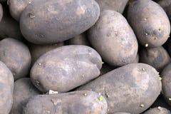 Zaad ongewassen aardappels met kleine spruiten stock afbeeldingen