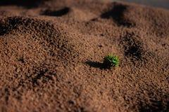 Zaad op woestijn stock afbeelding