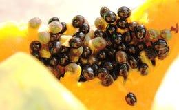 Zaad van papaja Royalty-vrije Stock Foto