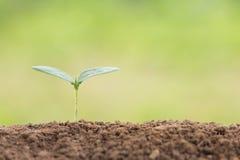 Zaadjonge plant op grond in ochtend stock afbeeldingen