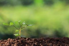 Zaadwortels van jonge plant royalty-vrije stock afbeeldingen
