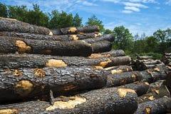 Zaaglogboeken, bomen, zaagmolen, timmerhout stock fotografie