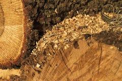 Zaagsel op brandhout Royalty-vrije Stock Foto