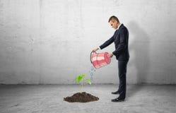 Zaailing het groeien van cement en zakenman die emmer met behulp van aan water het royalty-vrije stock foto