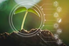 Zaailing het groeien van vruchtbare grond met pictogrammen over milieu op beeld royalty-vrije stock foto's