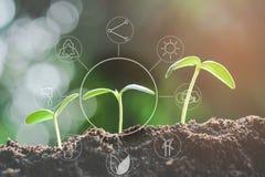 Zaailing het groeien van vruchtbare grond met pictogrammen over milieu op beeld stock afbeeldingen