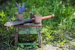 Zaailing van paprika en bloemen met een tuinschop op een oude houten kruk in zonnige de lentedag in een tuin royalty-vrije stock afbeelding