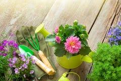 Zaailing van tuinbloemen voor het planten, tuinmateriaal op houten raad Hoogste mening stock foto