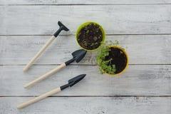 Zaailingen in potten op een witte houten achtergrond met tuinhulpmiddelen stock foto