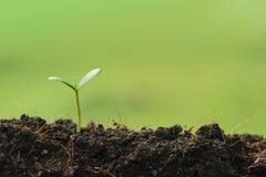 zaailingsinstallatie het groeien van de grond, concept voor zaken groeit Stock Fotografie