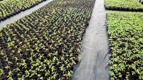 Zaailingskinderdagverblijf, Jonge planten die in een serre groeien stock videobeelden