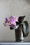Zaal bloem op een lichte achtergrond Royalty-vrije Stock Foto's