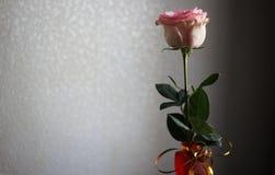 Zaal bloem op een lichte achtergrond Stock Foto